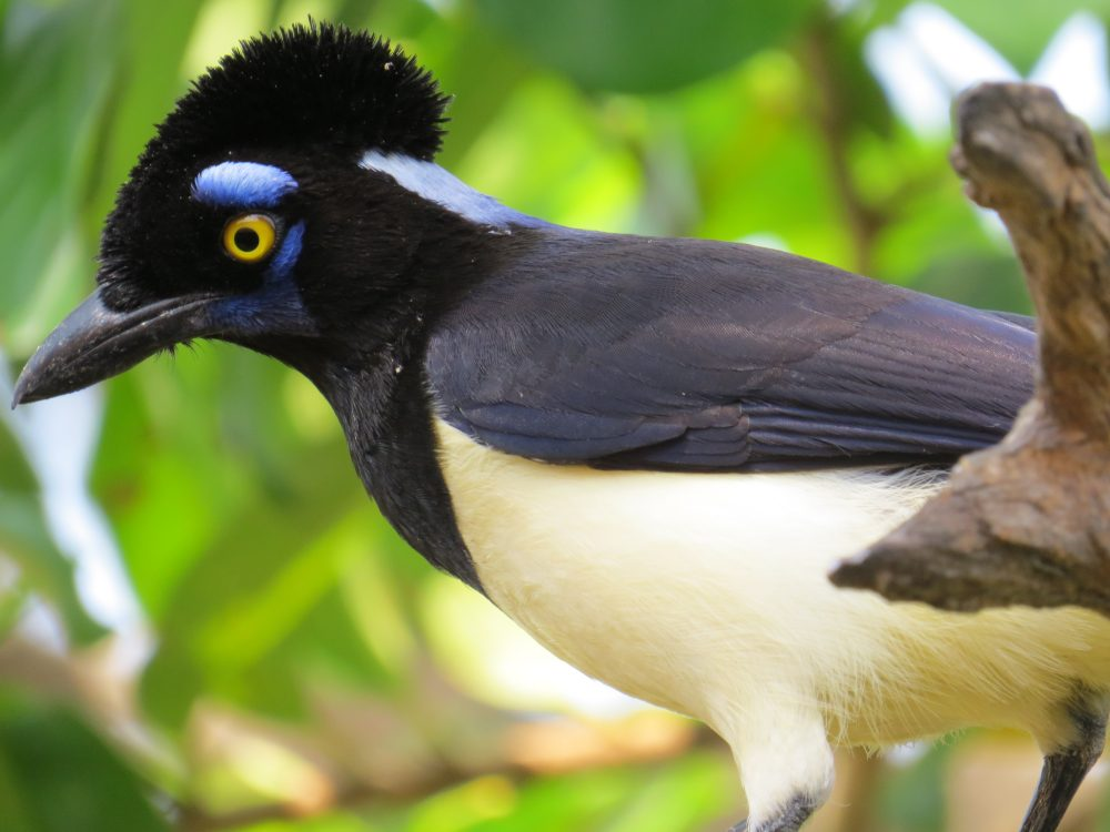 Pantanal bird (Photo: Nalvo Almeida Jr)